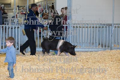 2018 KISD Swine Show Class 1