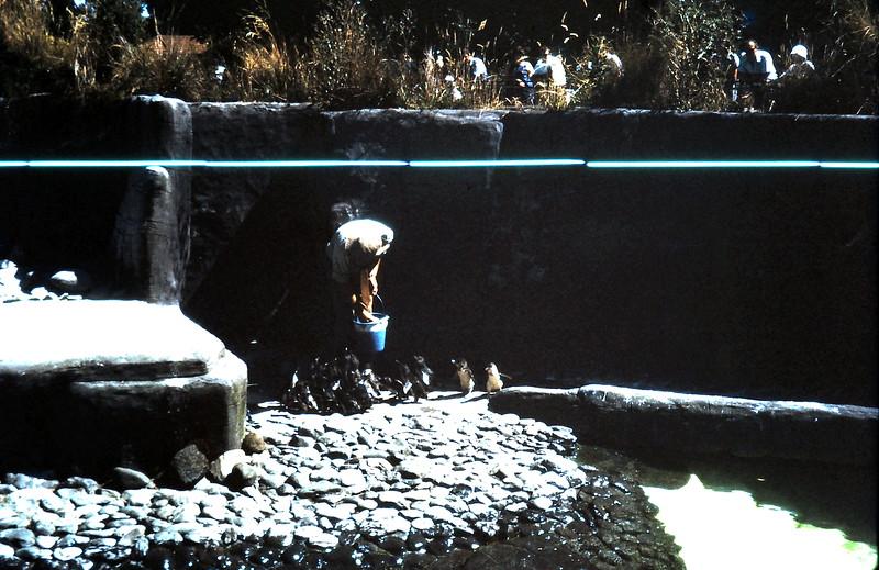 1972-1-30 (23) At the Zoo.JPG