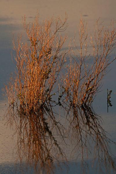 WB~Pondgrasssunset1600.jpg