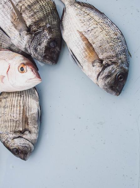 marseille fish market 2-2.jpg