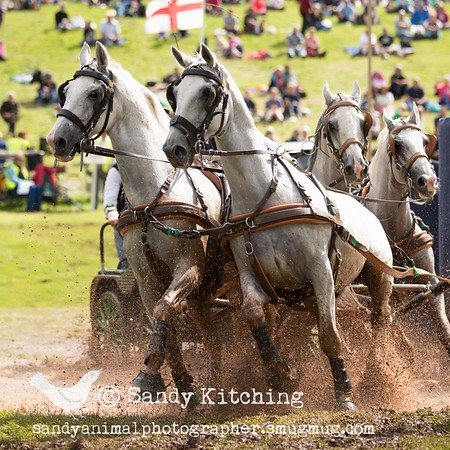 Lowther Show 2015