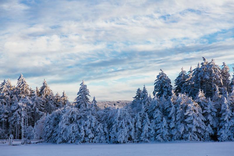 2020-02-01_SN_KS_Frosty Trees-0741.jpg