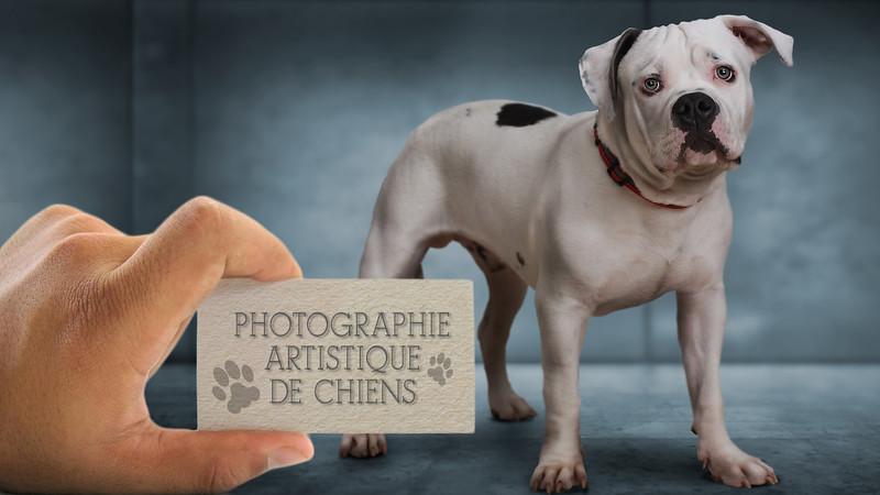 COVER-FOR-DOG.jpg