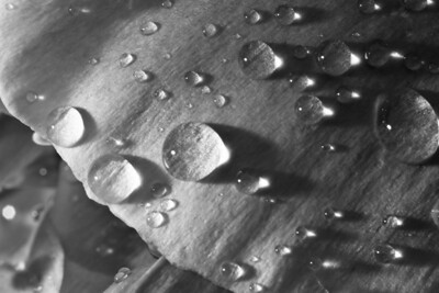 10-06-06 Water Droplets