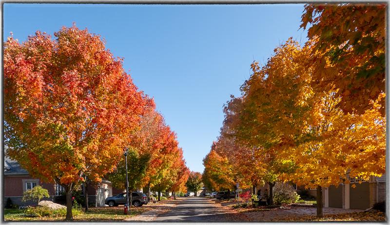 Our Street in Full Fall Splendor