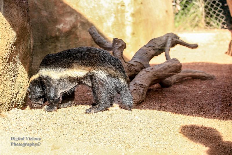 2016-07-17 Fort Wayne Zoo 157LR.jpg