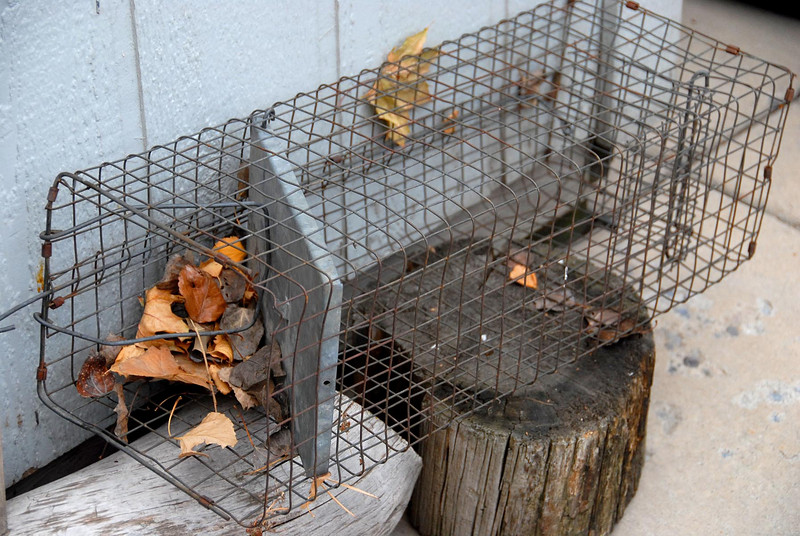 11/17/07 – This image has sentimental value to me. I ordered this squirrel trap out of a catalog when I was 11 and we were living in Paradise, CA. It is now 38 years old and still works. I've lost track of many things over the years but I still have this trap. I caught a lot of squirrels, cats and even a few skunks. It represents some great childhood memories for me.