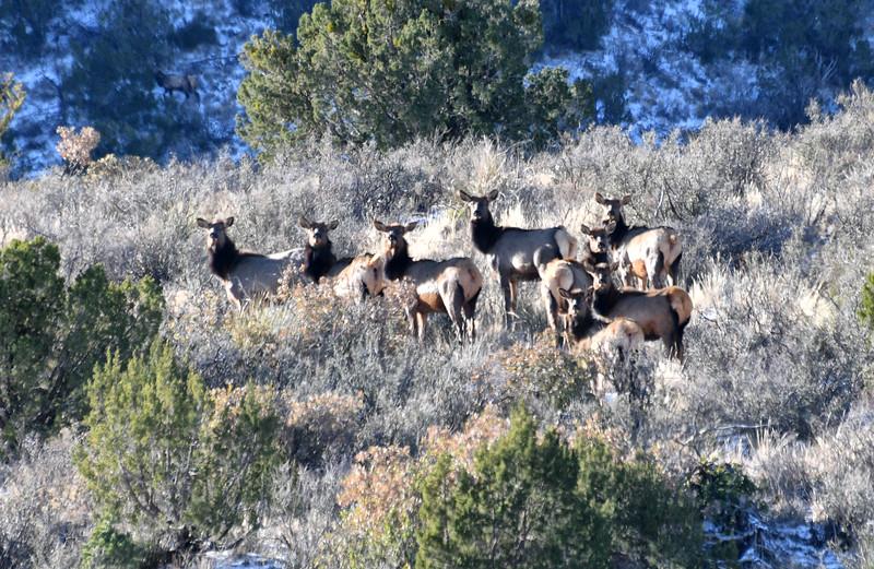 NEA_1702-Elk.jpg