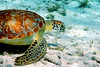 Turtle Side Belize
