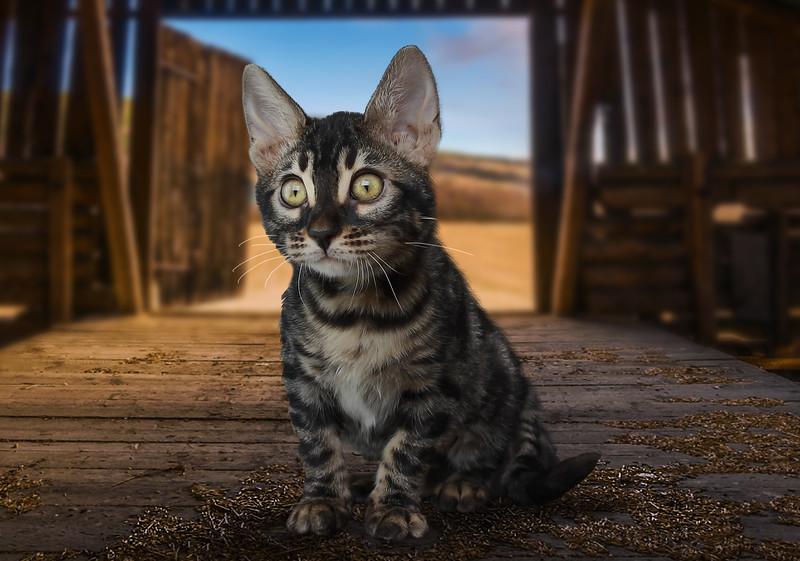 chaton-48.jpg