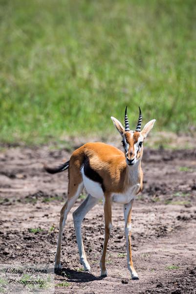 Kenya Wildlife-59.jpg
