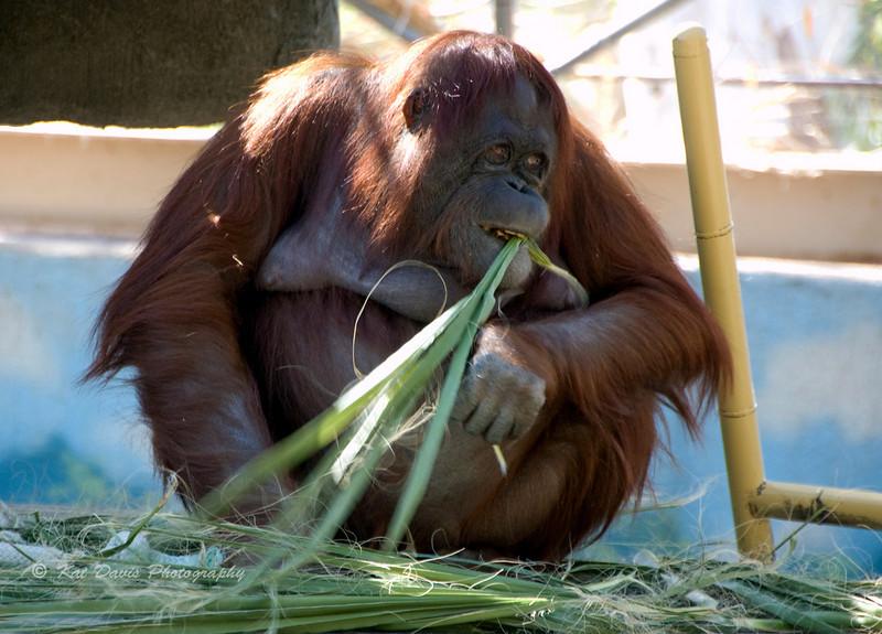 Eating Her Greens.jpg