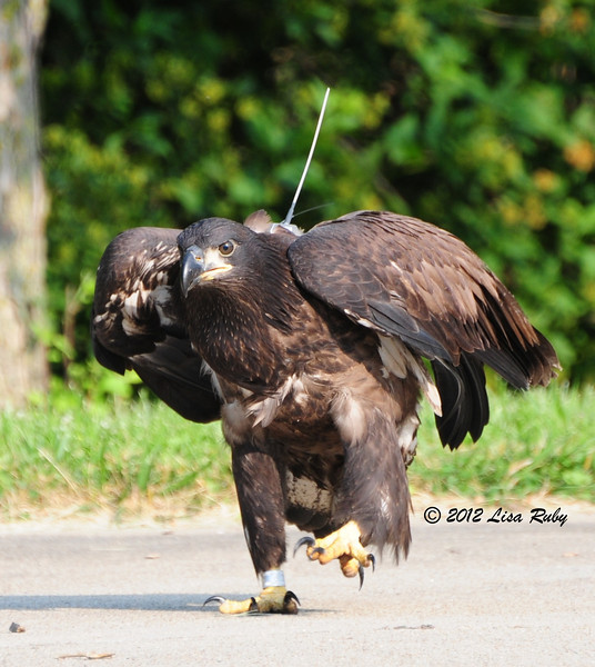 In this position and with the transmitter, D14 looks like a remote controlled eagle robot.