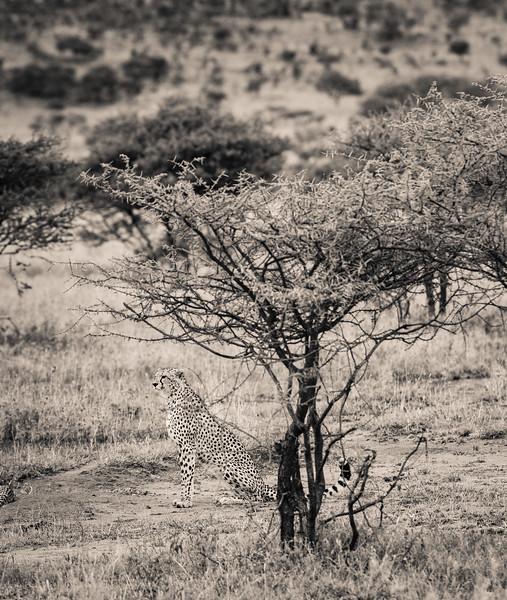 Tanzania_Feb_2018-1291.jpg