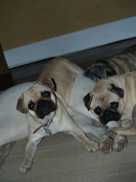 Silly Doggies 12.09.07