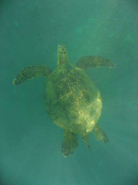 Maui Vacation (2009-07-10)