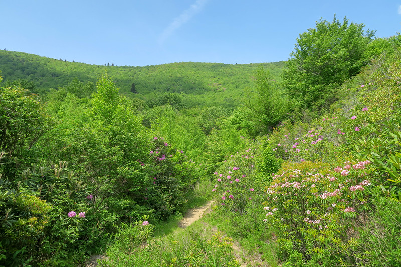 Graveyard Ridge Trail -- 5,430'