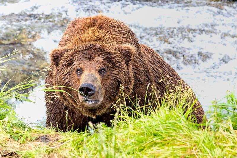 Alaska_2013_IG3A4358-2.jpg