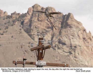 Osprey M68207.jpg
