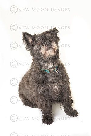 Glenthorne Pet Portraits 9th March 2020