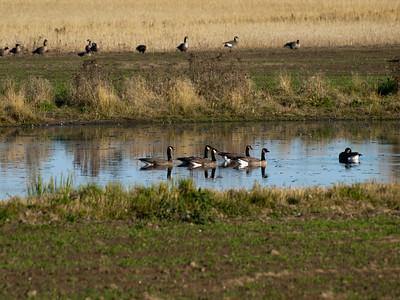 Cramers Field September 09