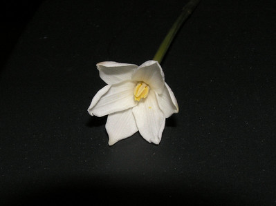 2008 - June - flowers, scenery