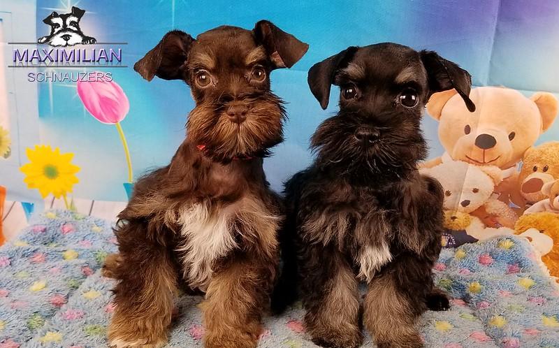 Jodie Pups 005.jpg