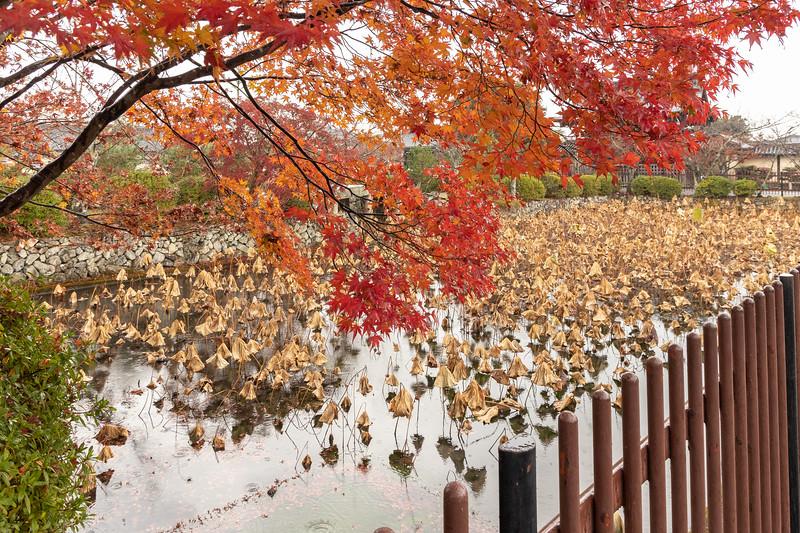 Kyoto12042018_191.jpg