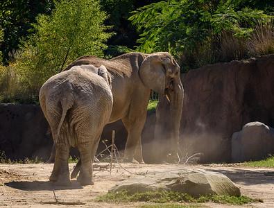 Cleveland Zoo Fall 2014