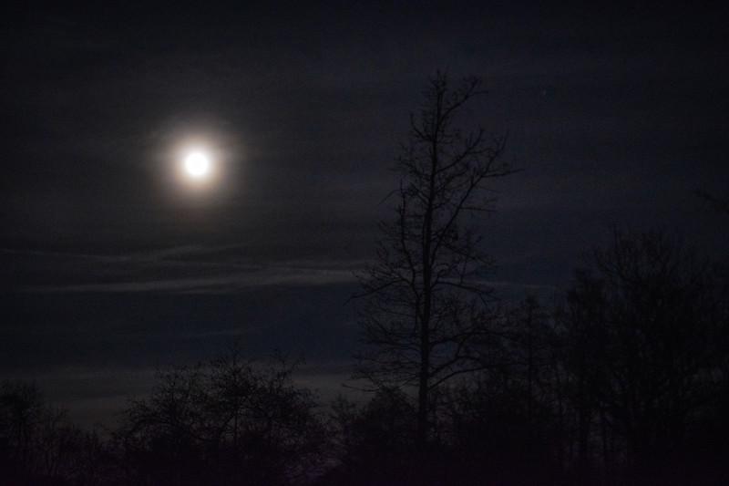 20200110-1751-Starlight Trail Relays #3 - Calke Abbey-0006.jpg