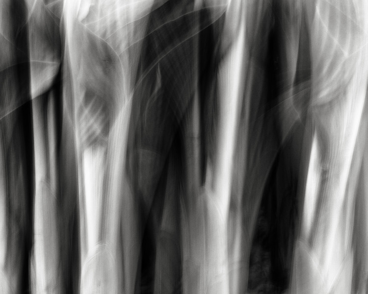 hosta, long exposure