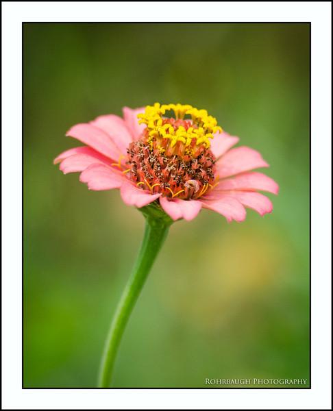Rohrbaugh Photography Flowers 25.jpg