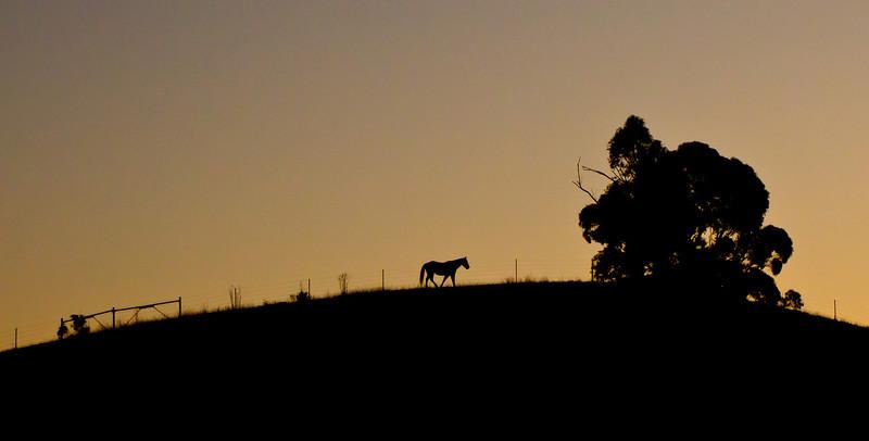 Horse and ridge silhouette from Fairmont Ridge.