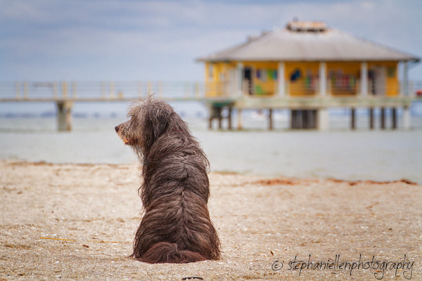 20141007dogs_fort_desoto_beach_Stephaniellenphotography.com-_MG_0222-Edit.jpg