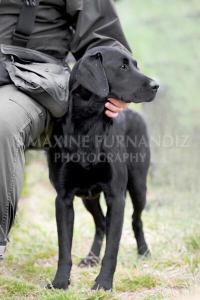 Dave Browns Dog--4-Edit.jpg