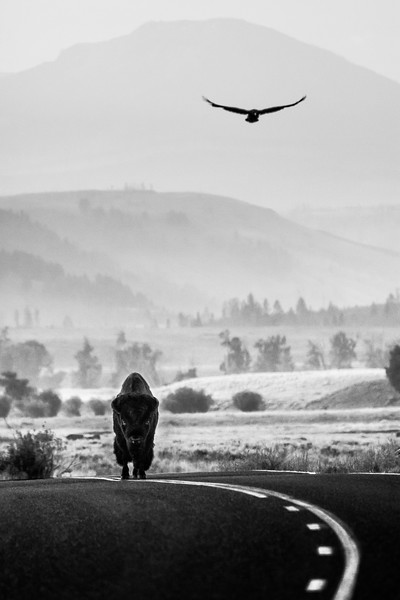 EAGLE AND THE BULL