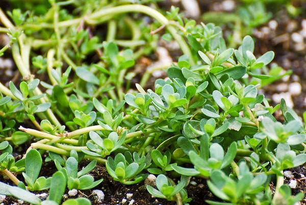 Endemic Hawaiian Plants