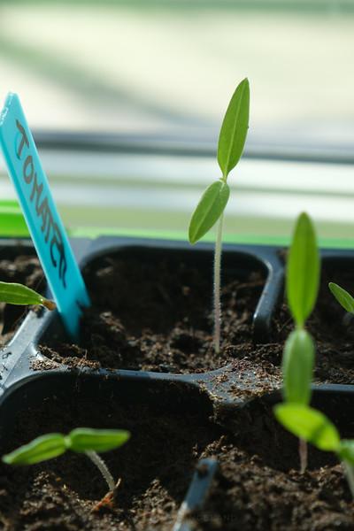 Oppal av småplanter
