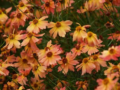 September Flowers of PA