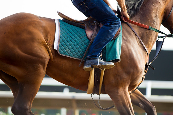 Del Mar Morning Workouts 7/26/2016