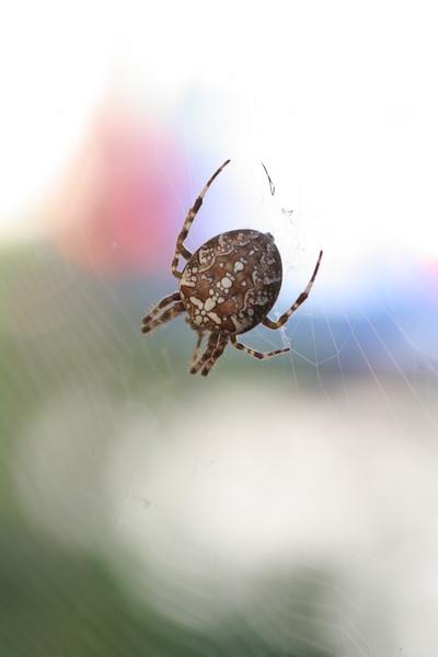 9135 Spider.JPG
