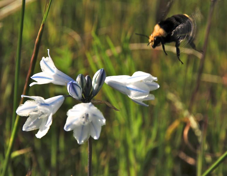 wildflowers12.jpg