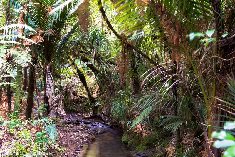 Greenery of New Zealand