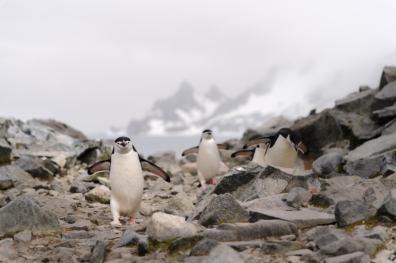 Antarctica-1426.jpg