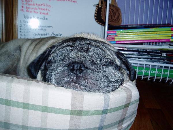 Sleeping Bubba 09.16.03