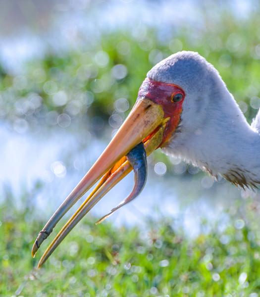 Birds_Storks-3.jpg