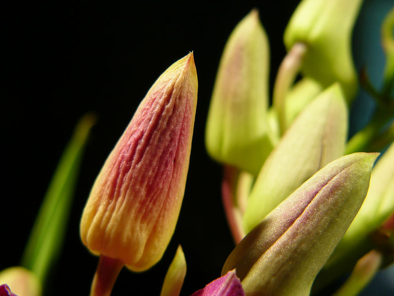 FlowersVase3.jpg