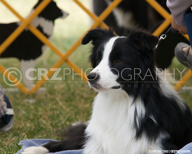2009 Grass Valley Dog Show