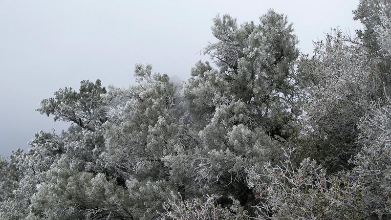 horforst on trees