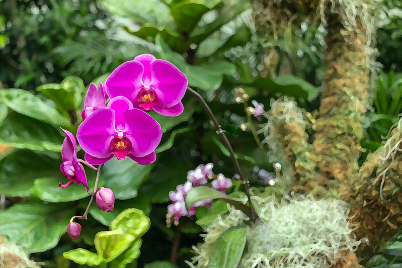 Orchid 08